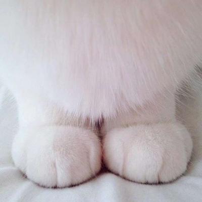 の:『猫咪大大胖爪子』
