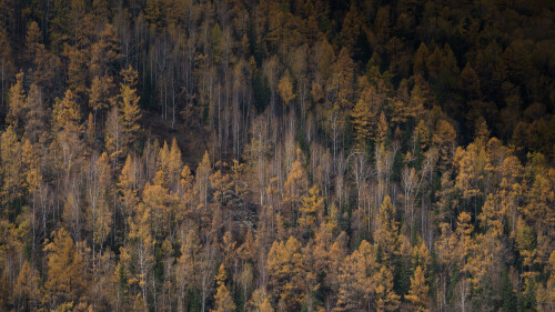 Autumn in Kanas by Wang Jinyu